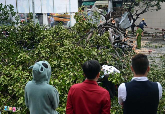 Hàng loạt cổ thụ ở Sài Gòn bật gốc đè bẹp ôtô, xe máy - Ảnh 1