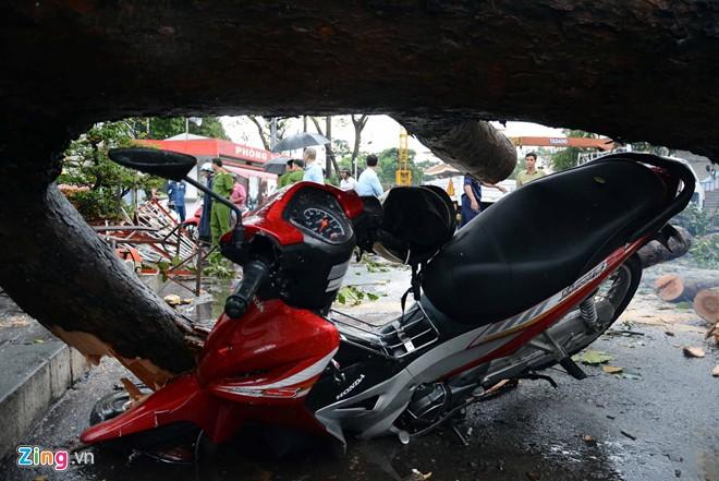 Hàng loạt cổ thụ ở Sài Gòn bật gốc đè bẹp ôtô, xe máy - Ảnh 7