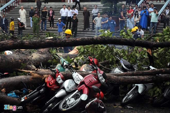 Hàng loạt cổ thụ ở Sài Gòn bật gốc đè bẹp ôtô, xe máy - Ảnh 6