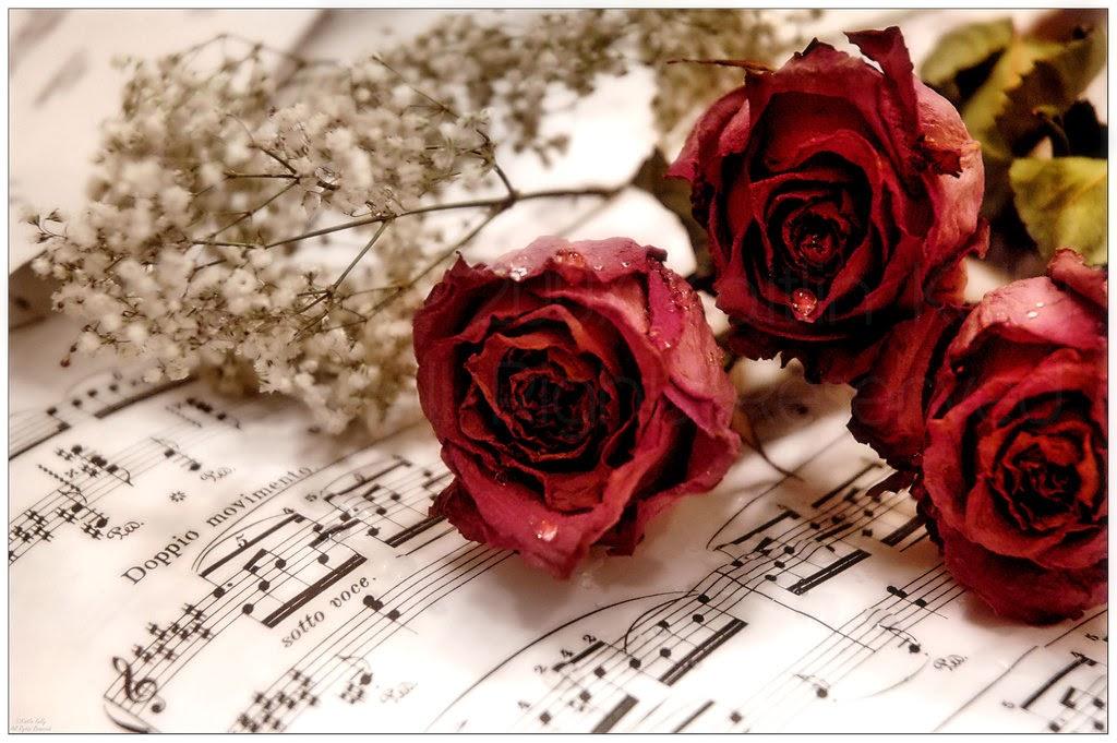 Nước mắt mặn chát ngày Valentine - Ảnh 1