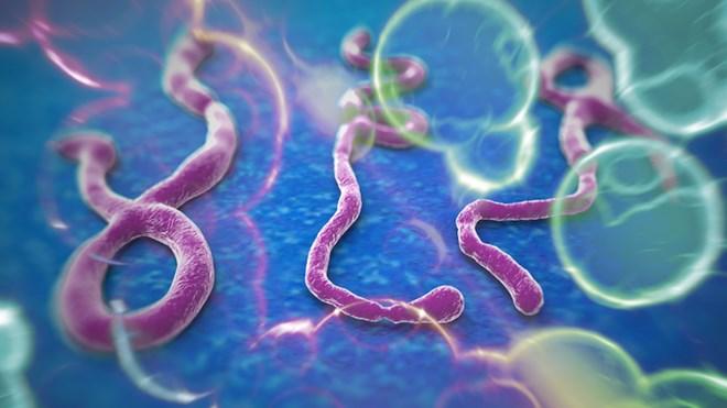 Bệnh nhân Ebola tử vong đáng sợ như thế nào? - Ảnh 2
