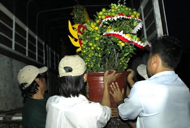 Tận mắt cây cảnh hình ngựa bạc triệu chơi Tết Giáp Ngọ - Ảnh 12