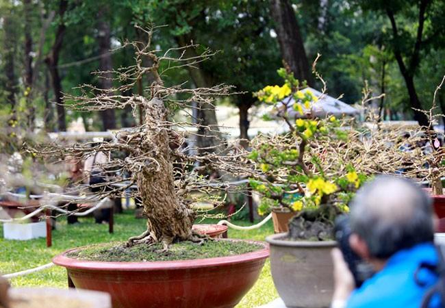 Chiêm ngưỡng cây cảnh bạc tỷ bày Tết Giáp Ngọ - Ảnh 2