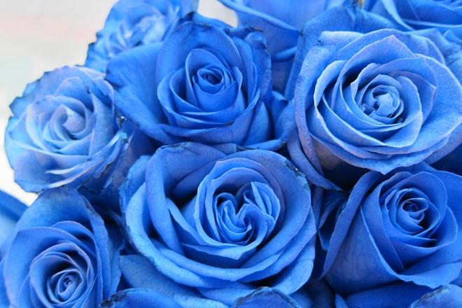 Hoa hồng dài 1,6 m giá 700.000 đồng hút khách Sài Gòn - Ảnh 9