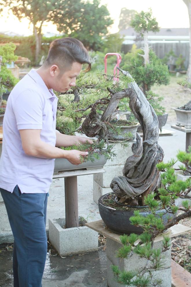 Bằng Kiều khoe vườn bonsai tiền tỷ ở Mỹ - Ảnh 2