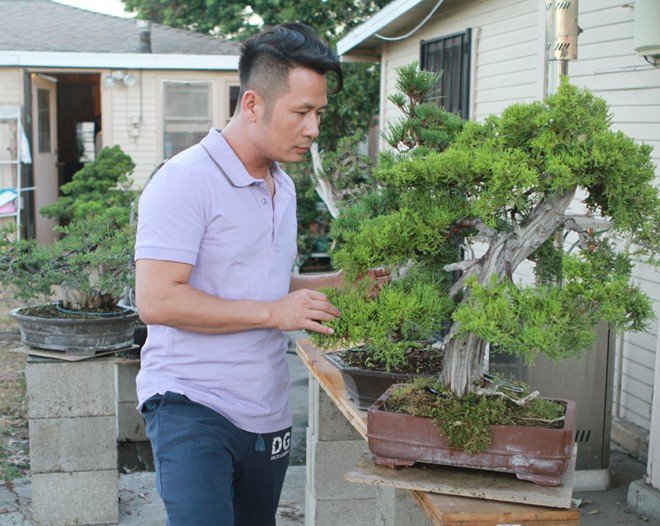 Bằng Kiều khoe vườn bonsai tiền tỷ ở Mỹ - Ảnh 4