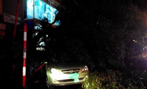 Hà Nội mưa giông dữ dội, cây đổ khắp phố - Ảnh 2