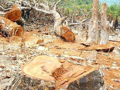 Hàng loạt nhà đầu tư đến Đắk Nông: Lập dự án để phá rừng, bán đất - Ảnh 1