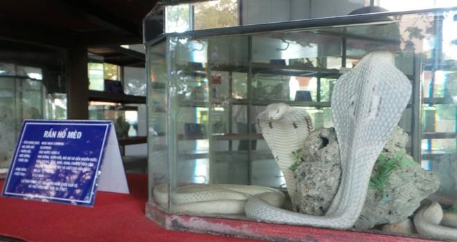 Những loài rắn cực độc ở trại rắn lớn nhất Việt Nam - Ảnh 5