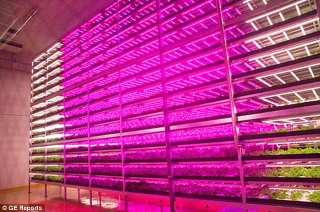 Tận mục công nghệ trồng rau siêu nhanh, tiết kiệm - Ảnh 1
