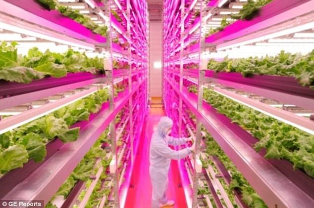 Tận mục công nghệ trồng rau siêu nhanh, tiết kiệm - Ảnh 2