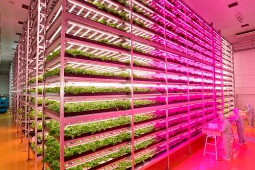 Tận mục công nghệ trồng rau siêu nhanh, tiết kiệm - Ảnh 4