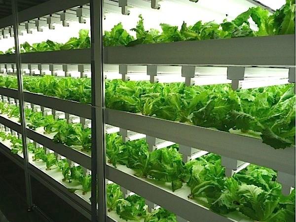 Tận mục công nghệ trồng rau siêu nhanh, tiết kiệm - Ảnh 6