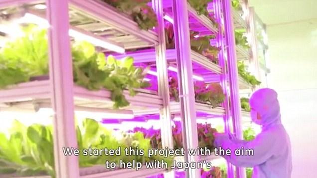 Tận mục công nghệ trồng rau siêu nhanh, tiết kiệm - Ảnh 7