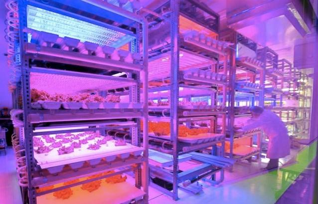 Tận mục công nghệ trồng rau siêu nhanh, tiết kiệm - Ảnh 8