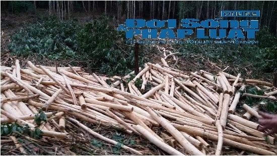 Vụ tranh chấp đất rừng: Người dân khát khao một mảnh đất sản xuất - Ảnh 1