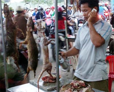 Đặc sản thịt thú rừng mất giá vì lo sợ nhiễm Ebola - Ảnh 1