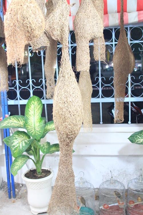 Tổ chim dồng dộc dài 1,4m xuất hiện tại Bạc Liêu - Ảnh 1