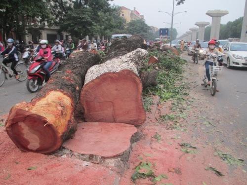 Lá phổi xanh của Thủ đô tiếp tục bị đốn hạ vì đường sắt trên cao - Ảnh 2
