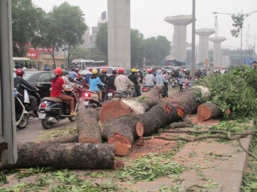 Lá phổi xanh của Thủ đô tiếp tục bị đốn hạ vì đường sắt trên cao - Ảnh 4