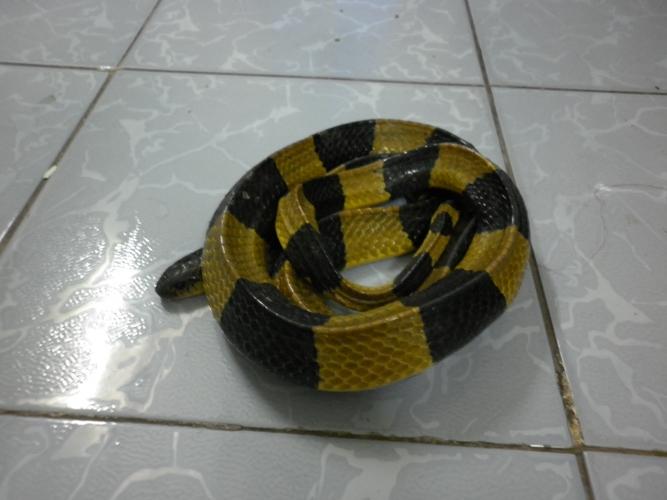 Đánh đu mạng sống để chơi... rắn độc - Ảnh 3
