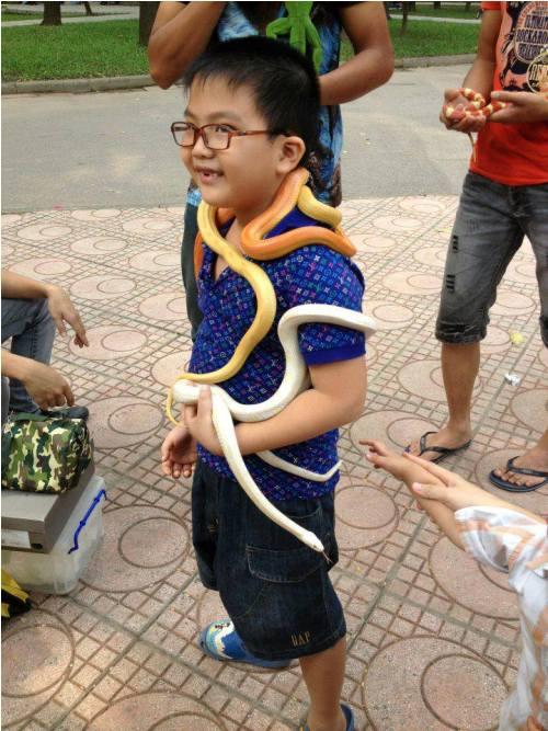 Đánh đu mạng sống để chơi... rắn độc - Ảnh 2