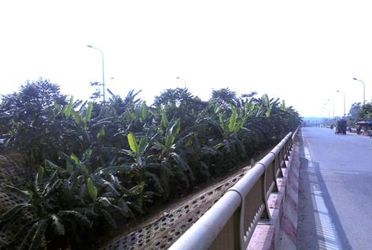 Dân dựng lều, trồng rau trên đại lộ nghìn tỷ - Ảnh 1