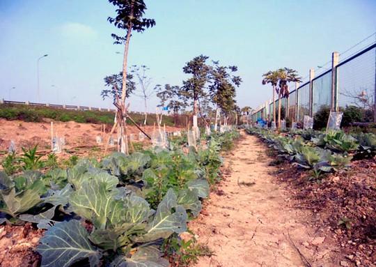 Dân dựng lều, trồng rau trên đại lộ nghìn tỷ - Ảnh 2