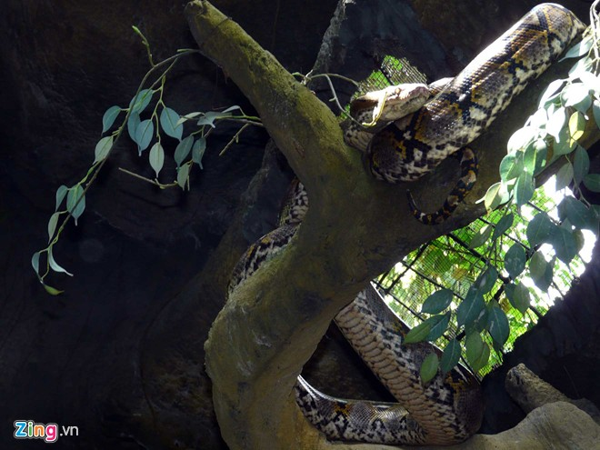"""Vườn thú tiền tỷ trong khu du lịch Đại Nam của ông Dũng """"lò vôi"""" - Ảnh 13"""