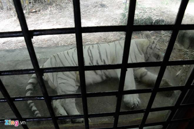 """Vườn thú tiền tỷ trong khu du lịch Đại Nam của ông Dũng """"lò vôi"""" - Ảnh 3"""