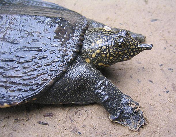 Cận cảnh động vật quý hiếm trong khu du lịch Đại Nam - Ảnh 1