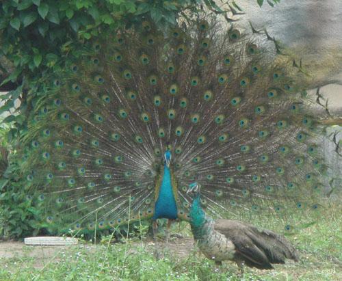 Cận cảnh động vật quý hiếm trong khu du lịch Đại Nam - Ảnh 3