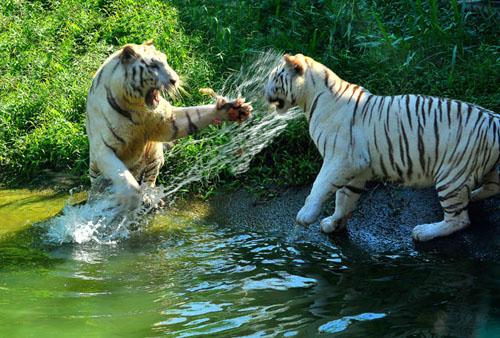 Cận cảnh động vật quý hiếm trong khu du lịch Đại Nam - Ảnh 7