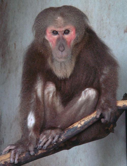 Cận cảnh động vật quý hiếm trong khu du lịch Đại Nam - Ảnh 8