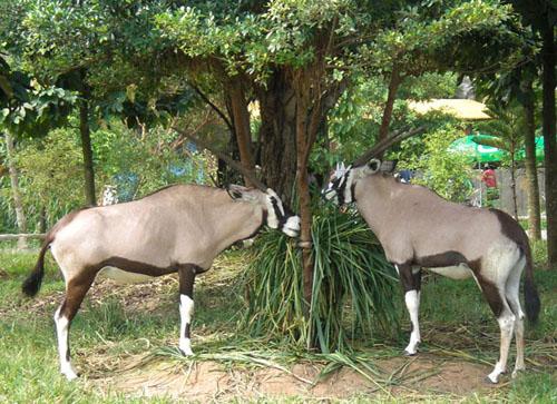 Cận cảnh động vật quý hiếm trong khu du lịch Đại Nam - Ảnh 9