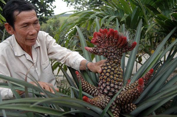 Những trái cây cực độc trong ngày tết của Việt Nam - Ảnh 4