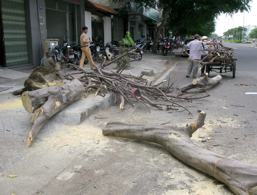Phú Yên: Cây bật gốc đè trúng 3 người đi đường - Ảnh 1