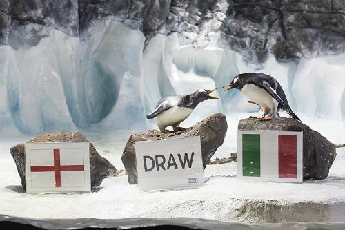 Những nhà tiên tri World Cup 2014 trong thế giới động vật - Ảnh 2