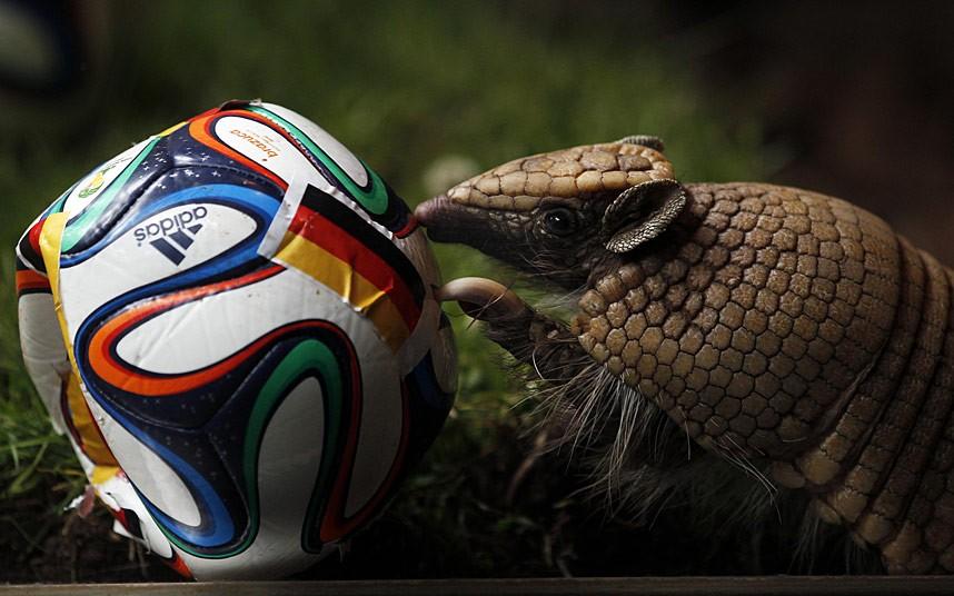 Những nhà tiên tri World Cup 2014 trong thế giới động vật - Ảnh 3