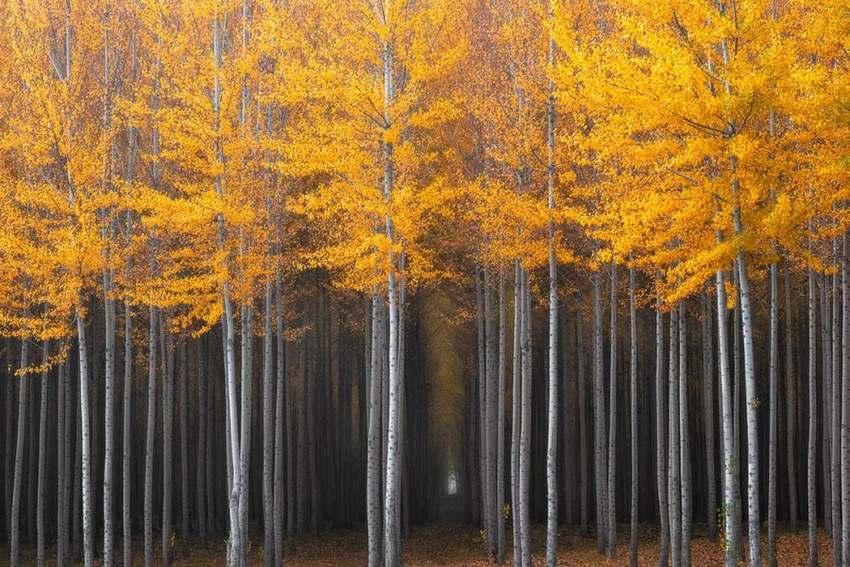 """15 """"thiên đường"""" mùa thu đẹp nhất trên thế giới - Ảnh 8"""