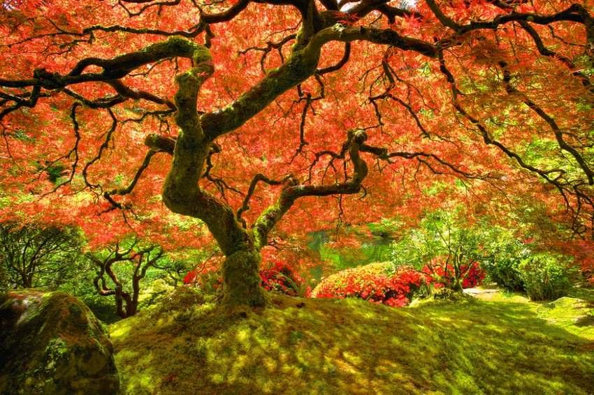 """15 """"thiên đường"""" mùa thu đẹp nhất trên thế giới - Ảnh 9"""