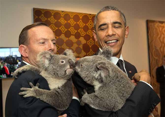 Gấu túi Koala giúp các nhà lãnh đạo xoa diu căng thẳng G20   - Ảnh 1