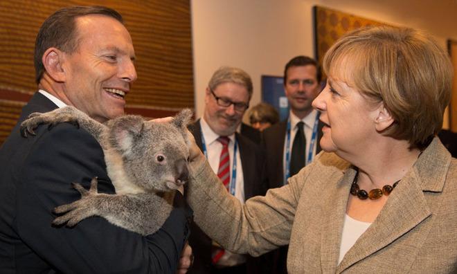 Gấu túi Koala giúp các nhà lãnh đạo xoa diu căng thẳng G20   - Ảnh 3