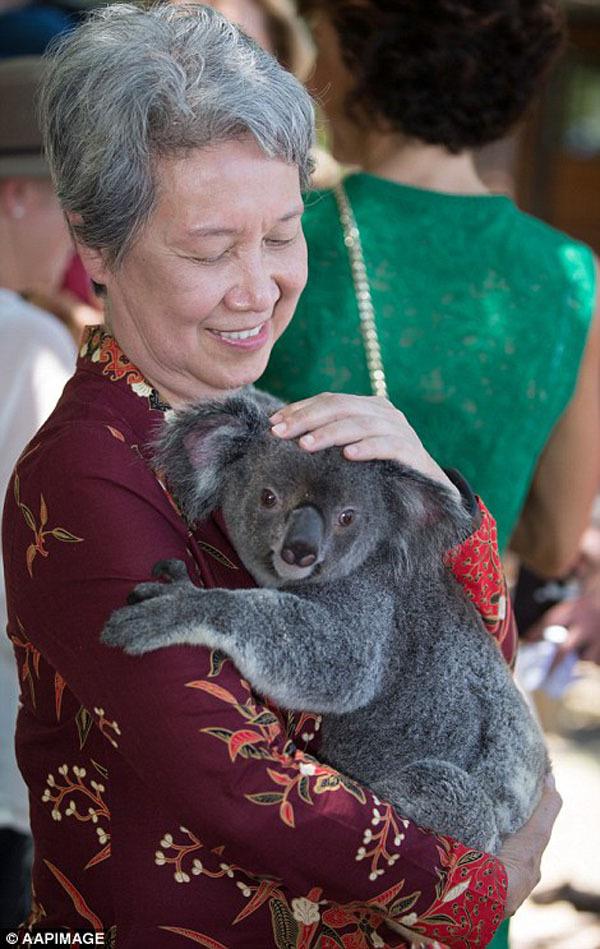 Gấu túi Koala giúp các nhà lãnh đạo xoa diu căng thẳng G20   - Ảnh 7