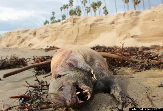 Phát hiện xác sinh vật bí ẩn trôi dạt ngoài bờ biển California - Ảnh 1