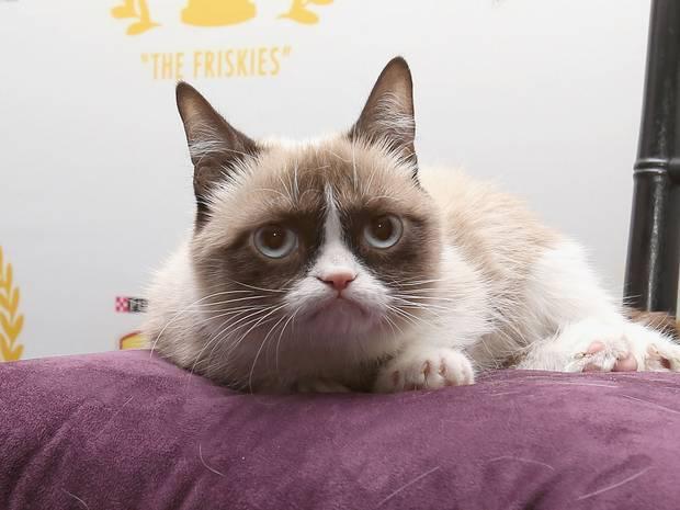 """Cô mèo """"cau có"""" kiếm hàng triệu USD cho chủ nhân - Ảnh 2"""