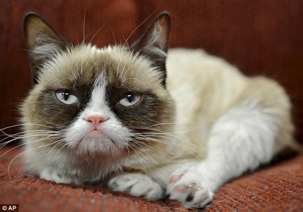 """Cô mèo """"cau có"""" kiếm hàng triệu USD cho chủ nhân - Ảnh 1"""