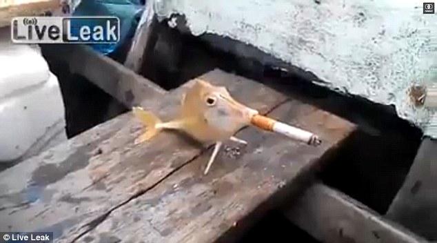 Sốc: Video chú cá bị ép hút thuốc lá - Ảnh 1