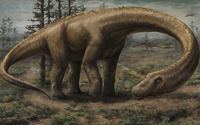 Phát hiện loài khủng long kích thước lớn hơn cả máy bay Boeing   - Ảnh 1