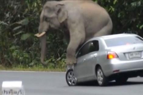 Ngỡ ngàng chú voi xông ra đường, nhảy lên nóc xe ôtô  - Ảnh 2